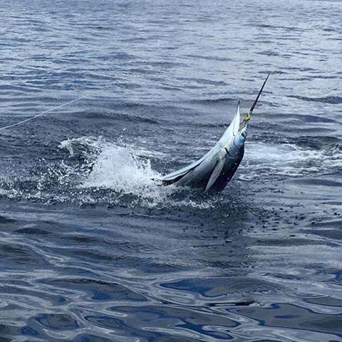 CR_sailfish