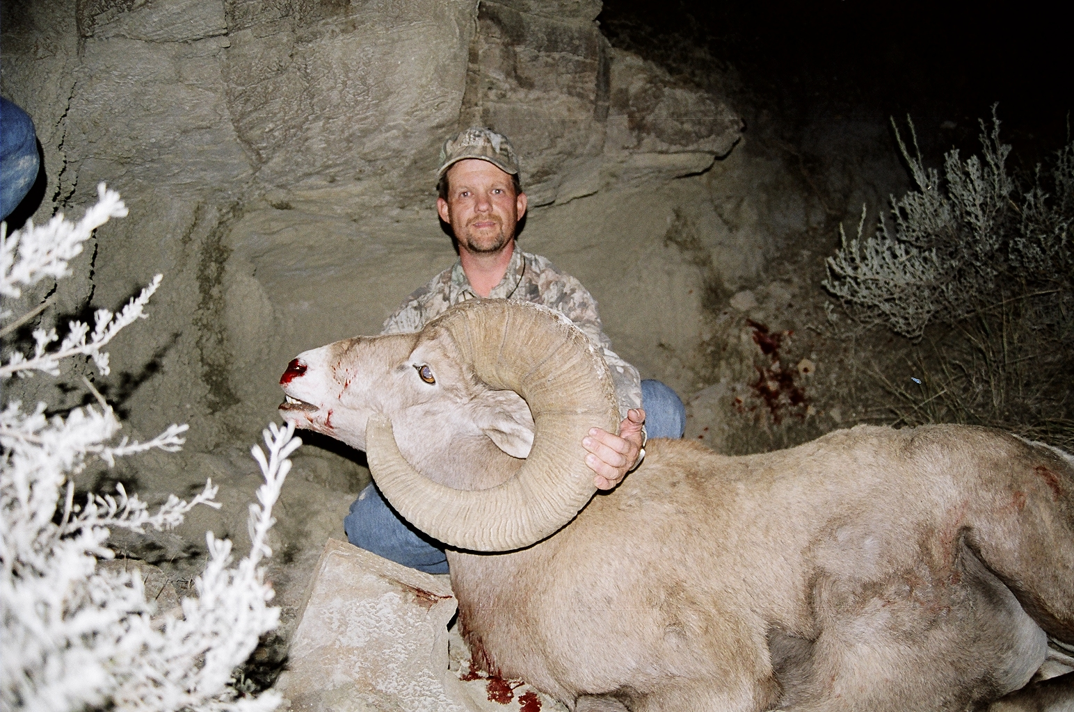 Chase_Hill_bighorn