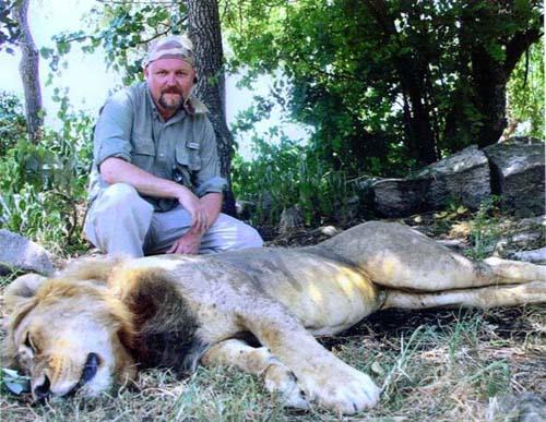 Darted-Lion