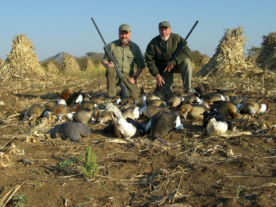 David-Mark-geese