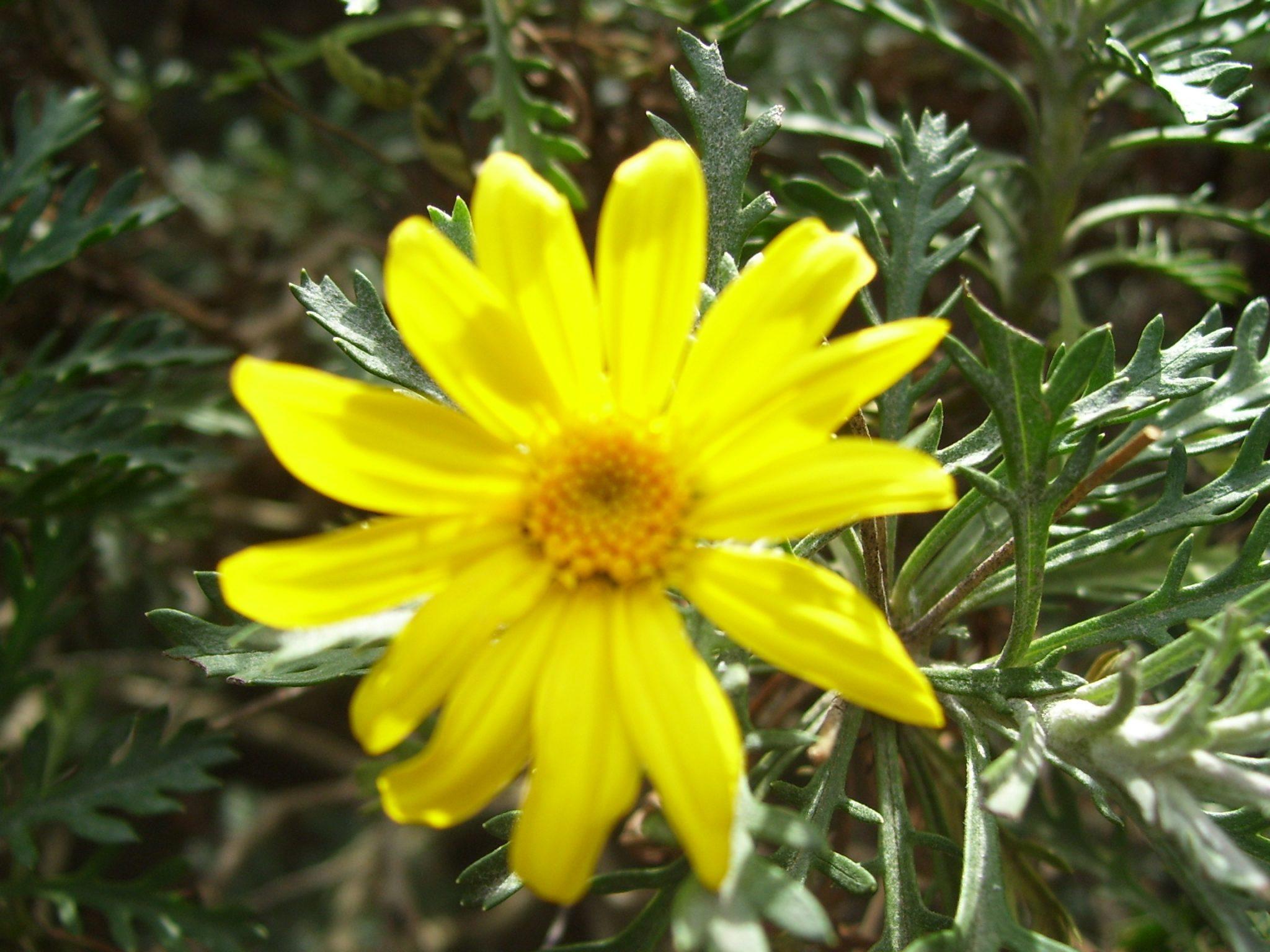 Flower.RSA1