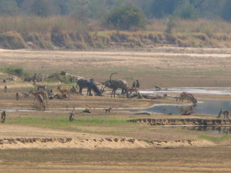 Luangwa.delta.zambia