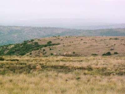 Zebra-Woodlands_2006-400