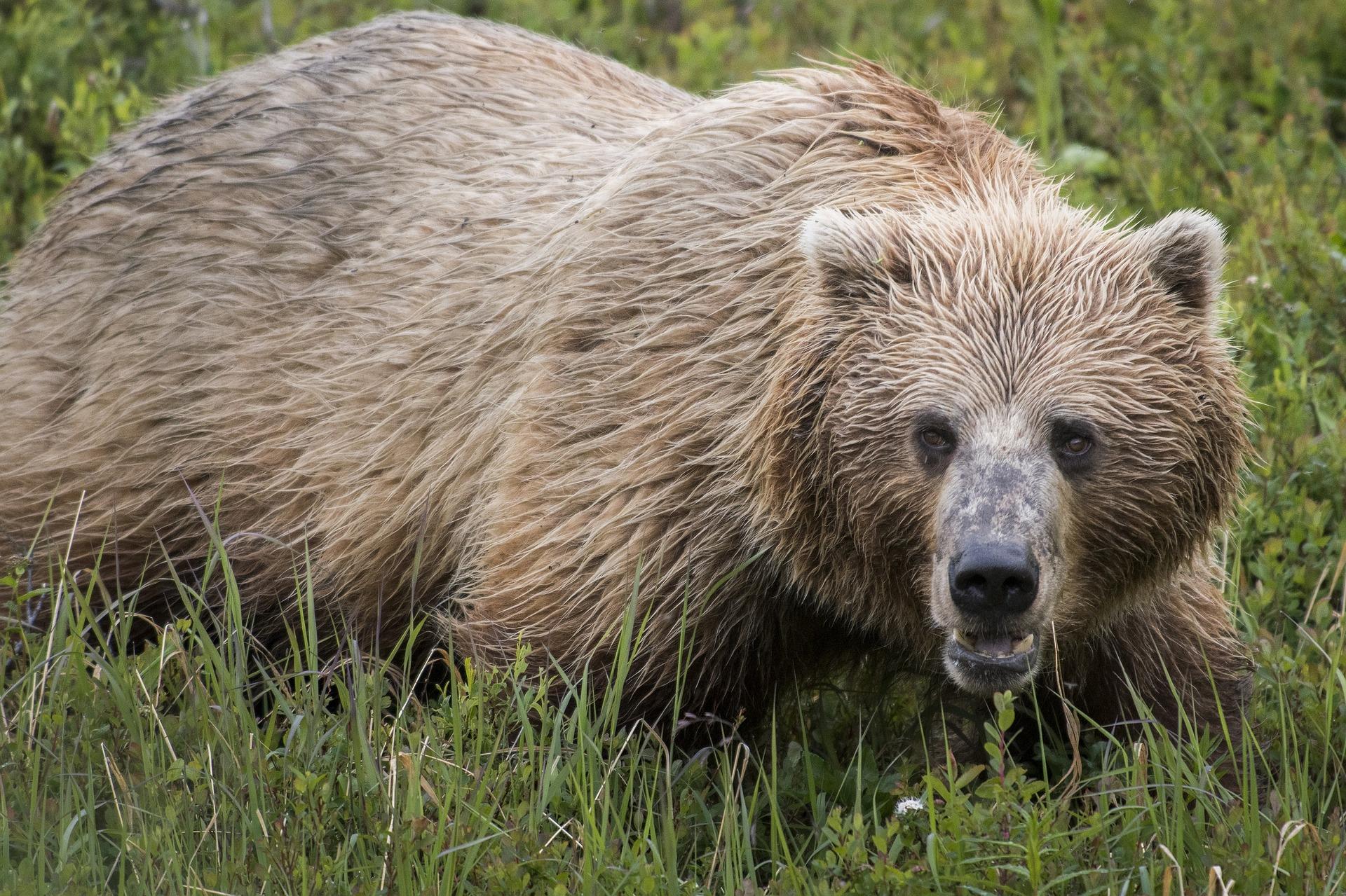 bear-3705012_1920