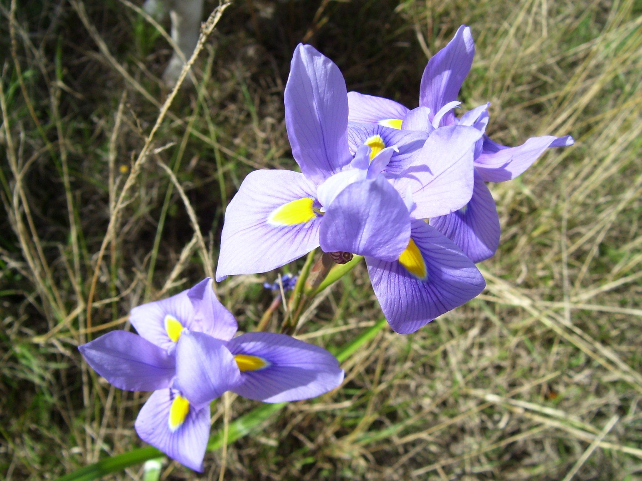 Flower.RSA2