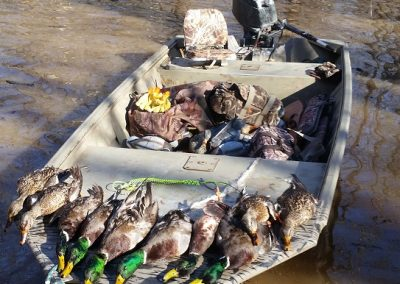 Shady_Elm_boat-timber-mallards
