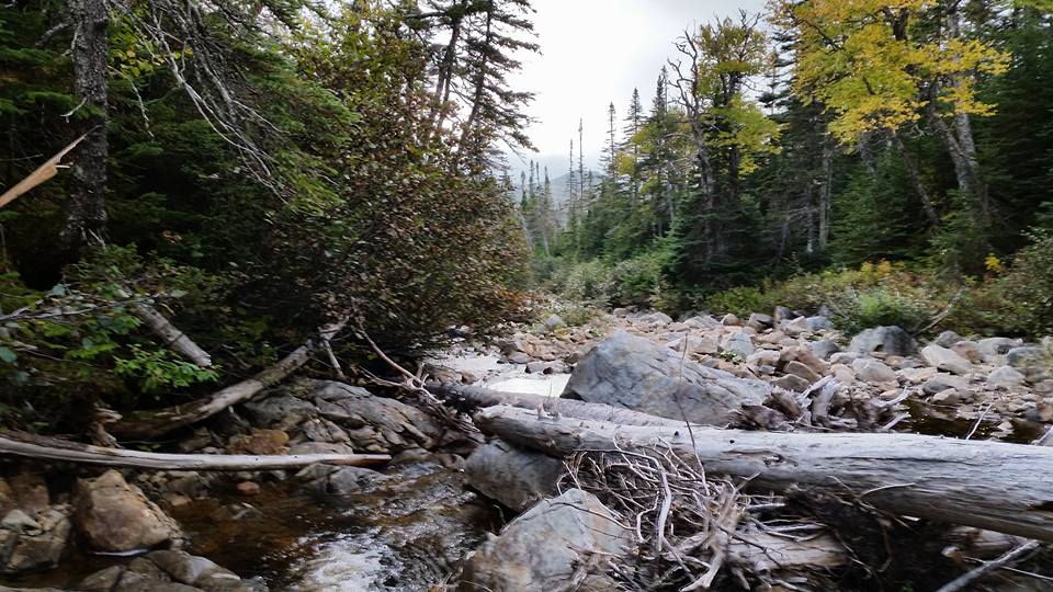 d-Newfoundland_brook_near_my_bear