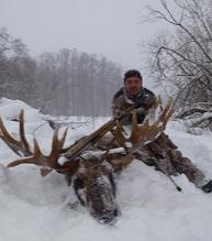 moose-4